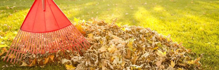 Comment préparer son jardin à l'arrivée de l'hiver