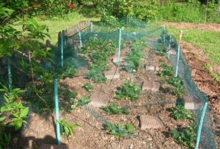 Le filet de protection jardin pour protéger votre potager et vos plantes des nuisibles