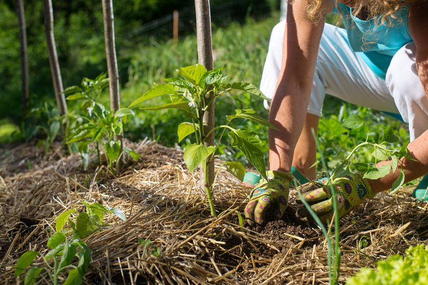 Paillage de jardin : que faut-il savoir sur ce procédé ?