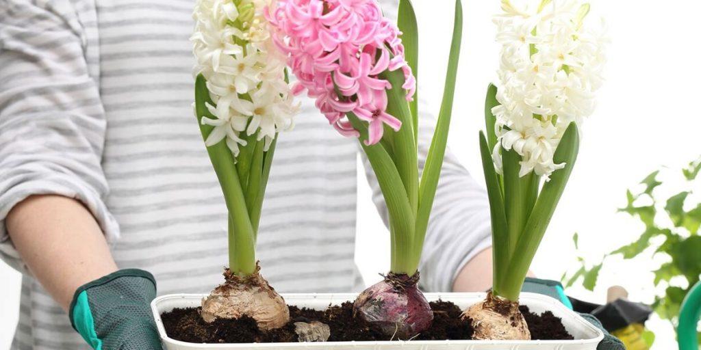 Comment bien choisir ses bulbes à fleurs ?